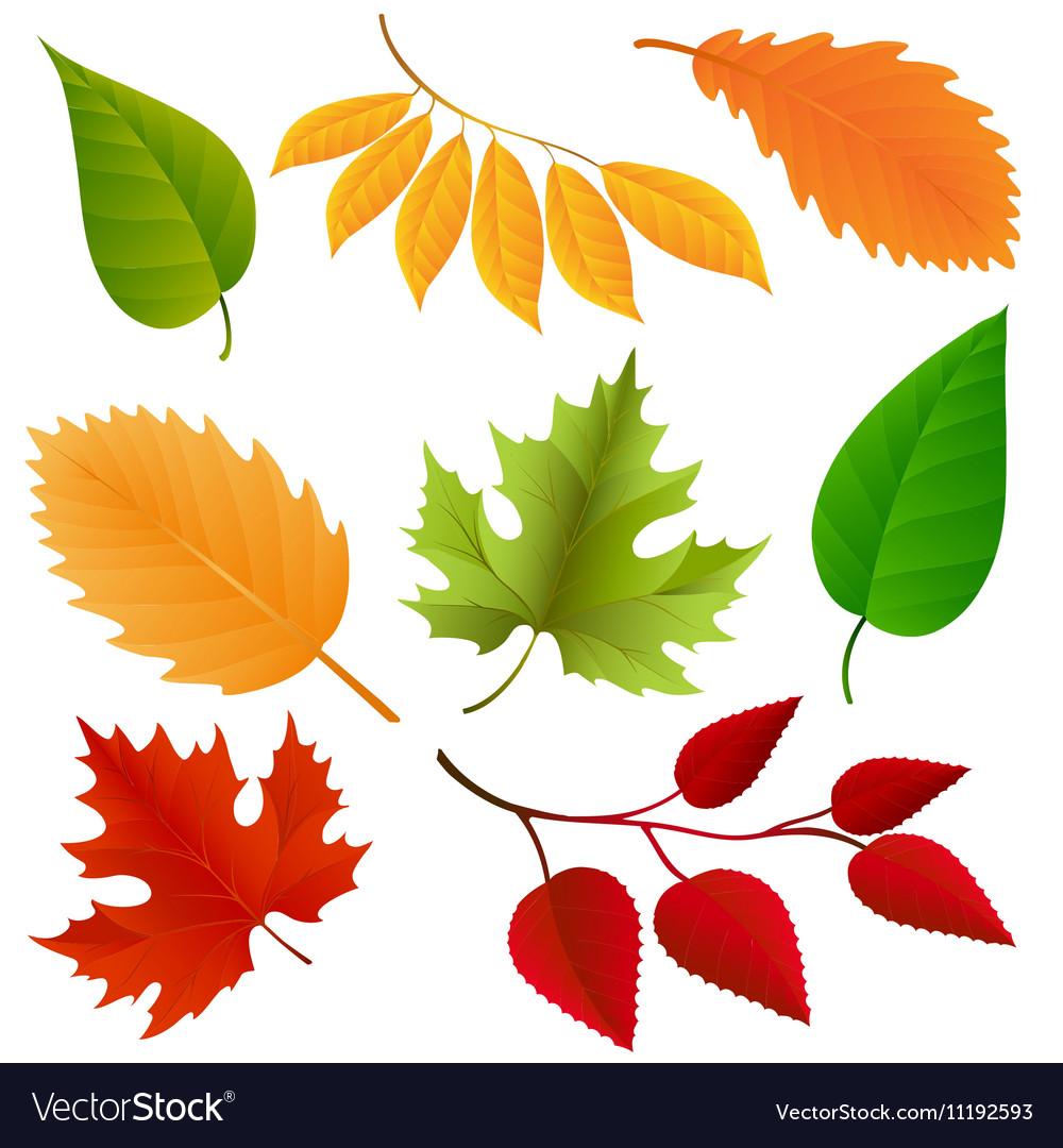 Autumn colors leaves set