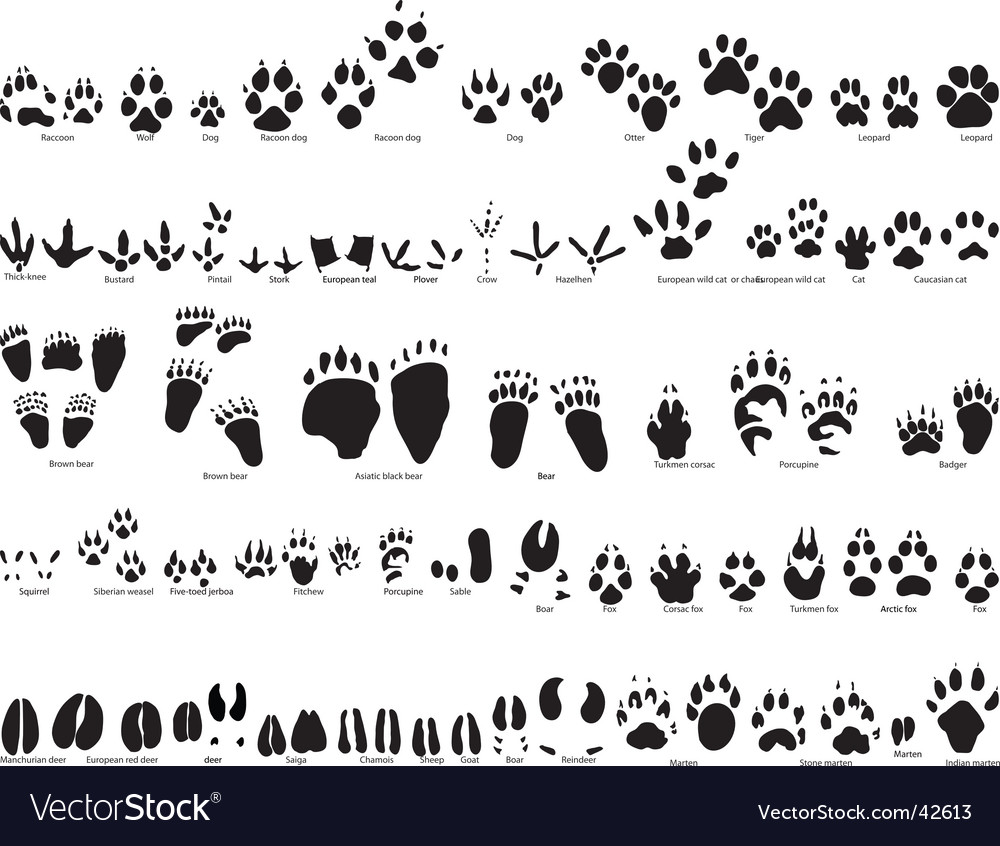 Animal trails vector image
