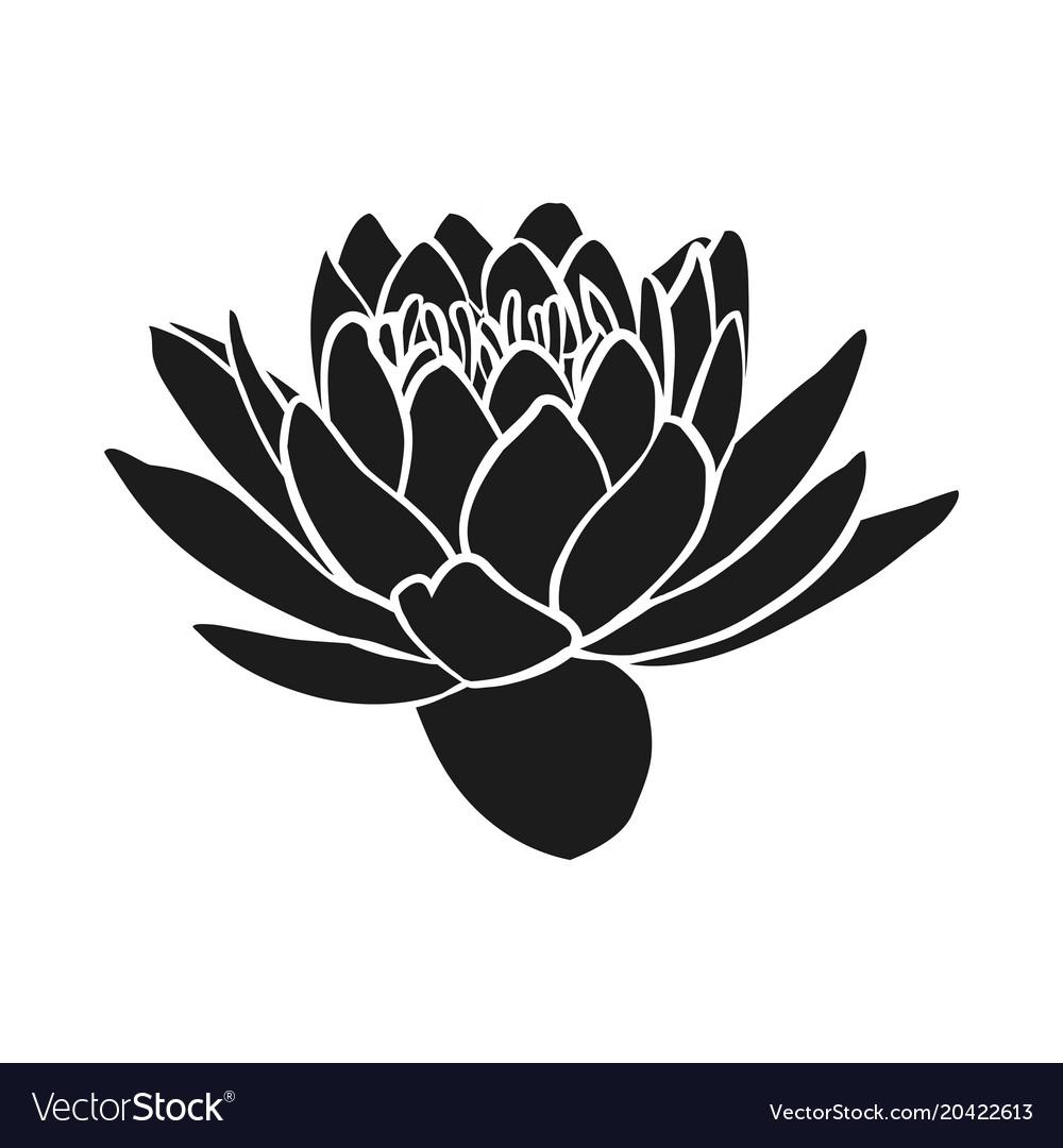 Lotus Flowers Icon Royalty Free Vector Image Vectorstock