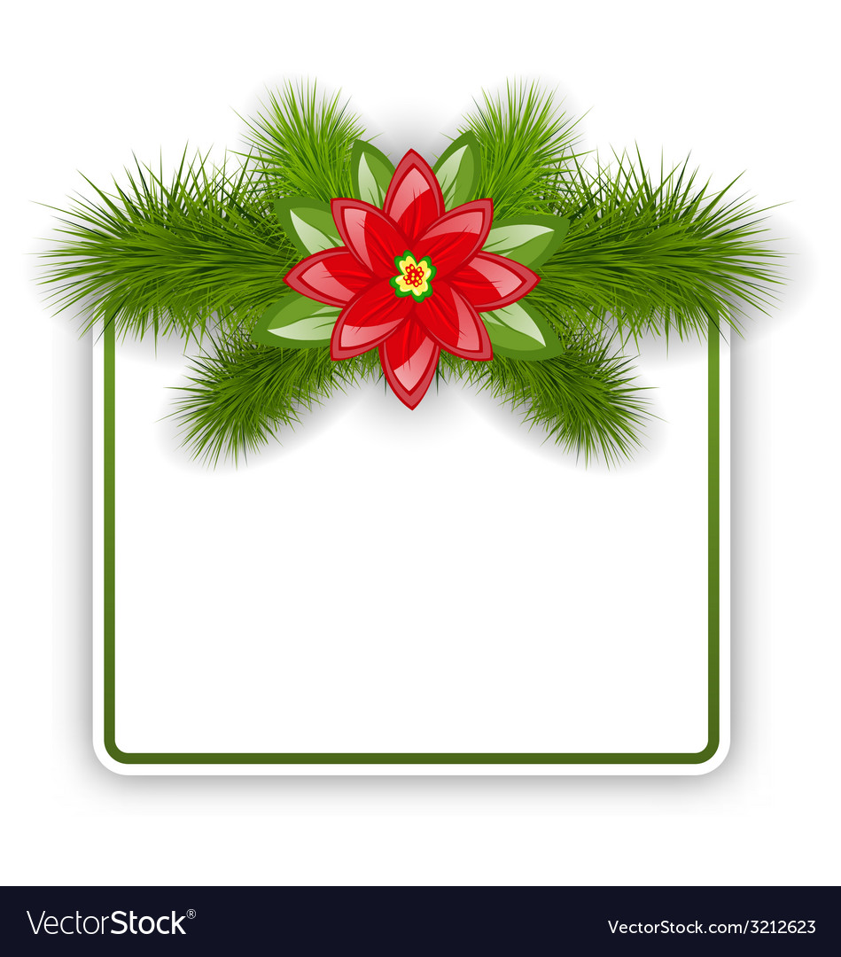 Christmas postcard with fir twigs and flower vector image