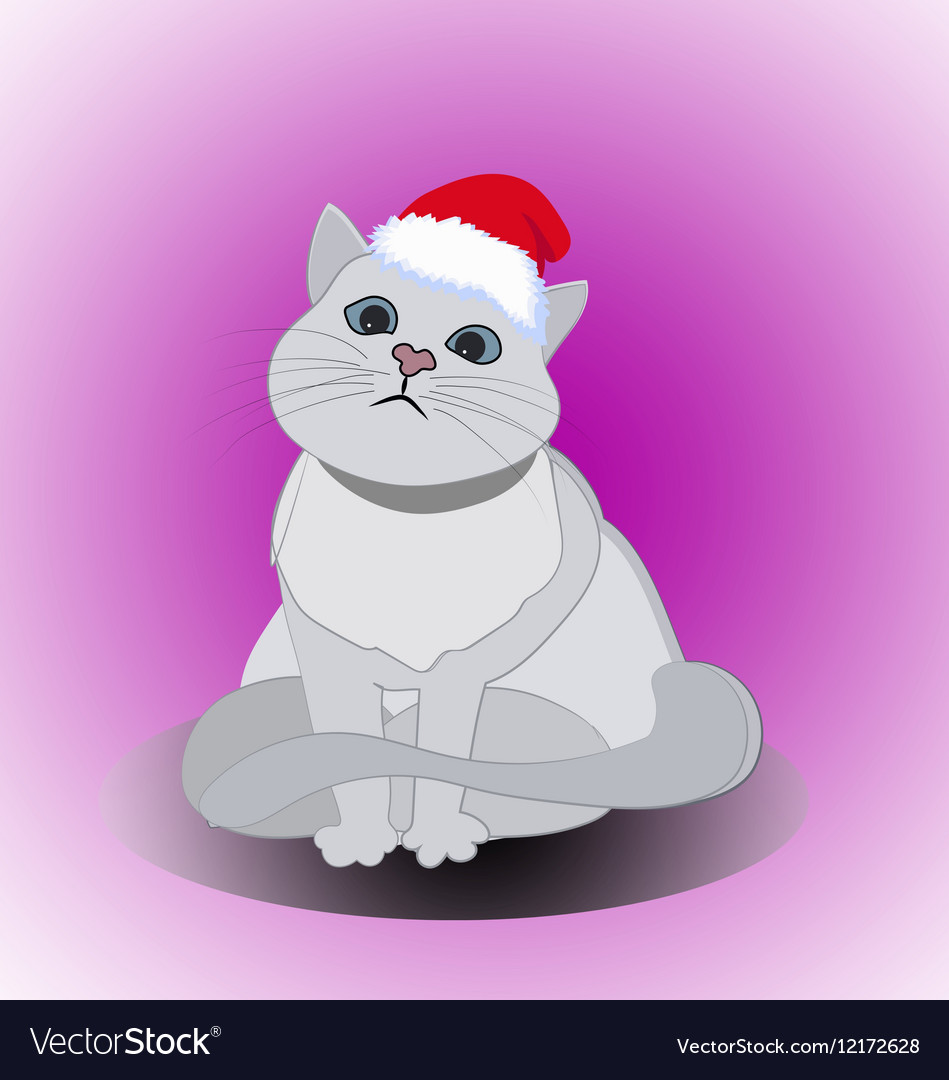 Christmas cute cat