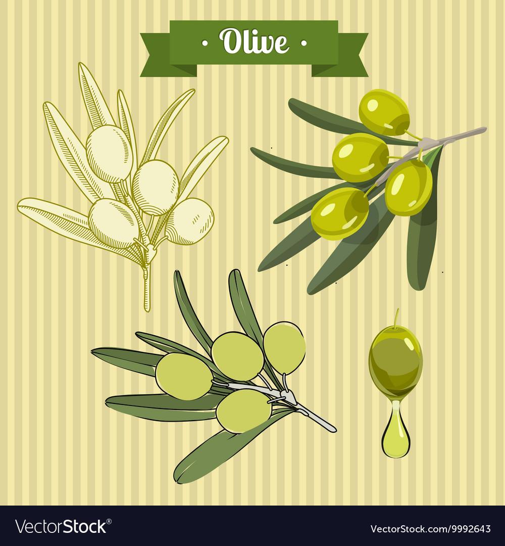 Set of green olives 2