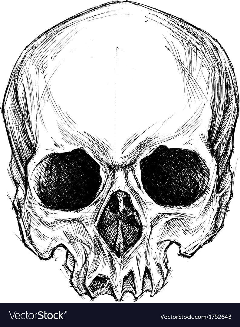 Skull Drawing Royalty Free Vector Image - VectorStock