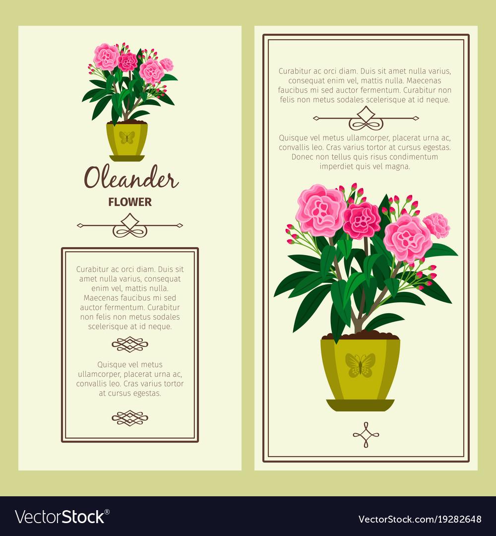 Oleander flower in pot banners