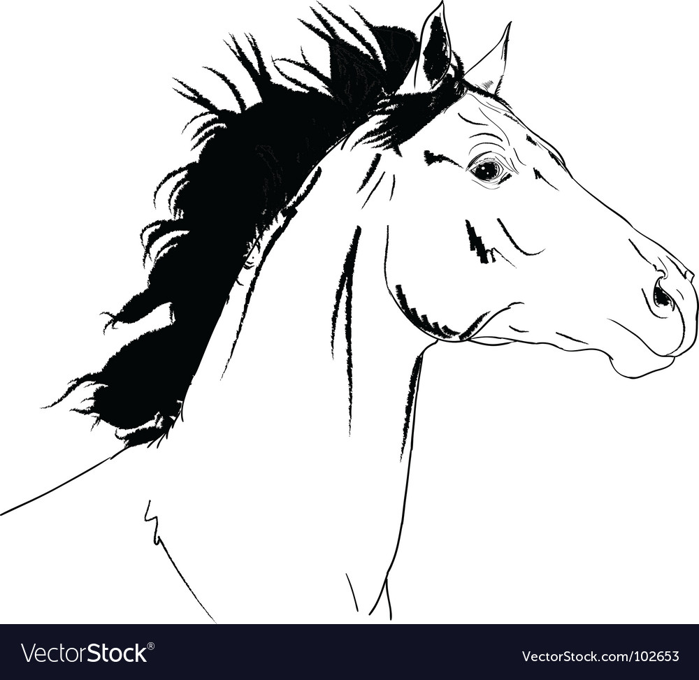 Arab Horse Head Vector. Artist: Marusya1; File type: Vector EPS