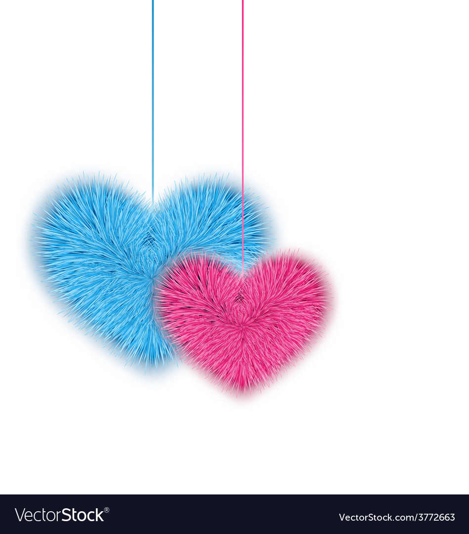 Fur pink and blue hearts for Valentines Day vector image