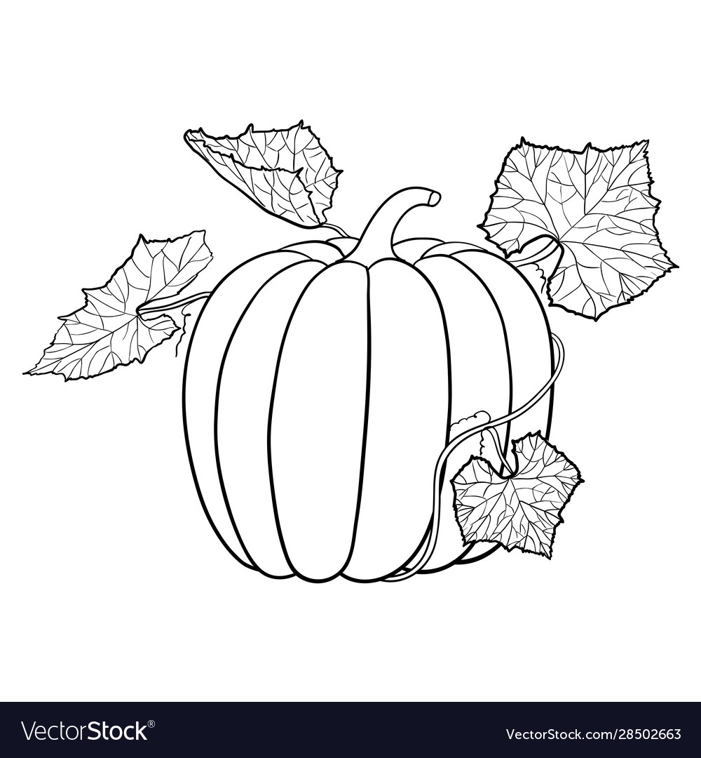 Pumpkin with leaves outline icon