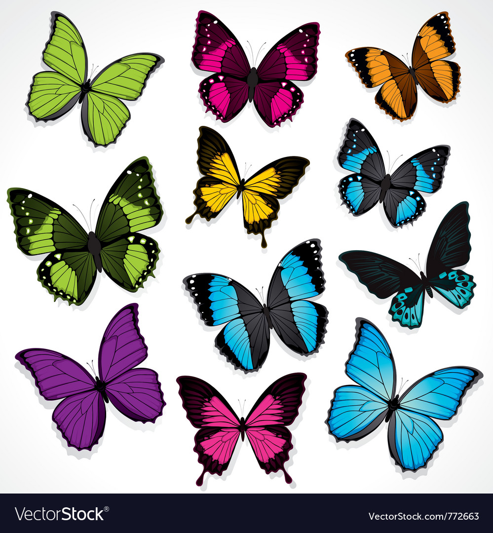 Set of colorful butterflies Royalty Free Vector Image