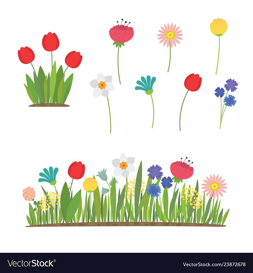 Spring flowers growing in garden tulips