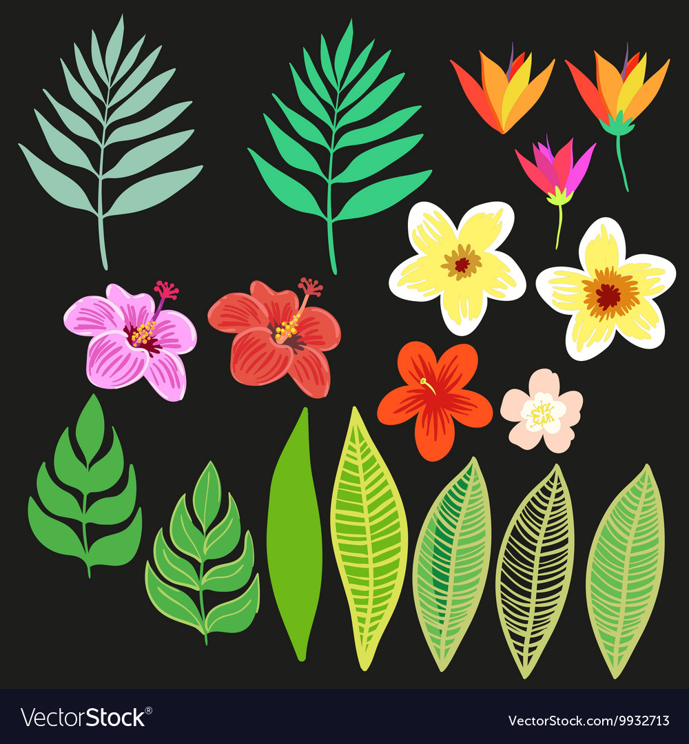 Beautiful floral jungle elements Colorful