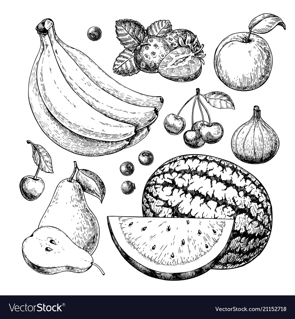 Fruit and berry drawing set hand drawn