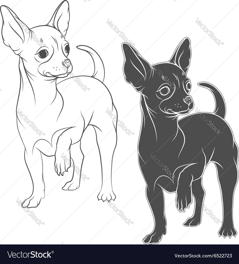 Drawing a chihuahua solated objects