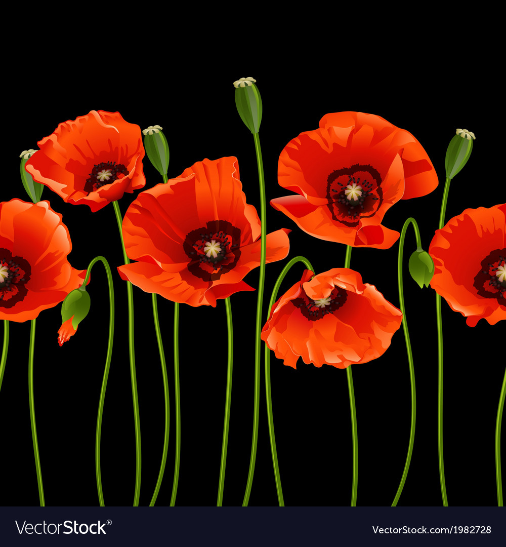 Red Poppies In A Row Royalty Free Vector Image