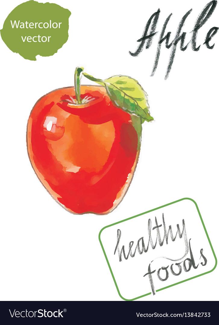 Watercolor apple watercolor