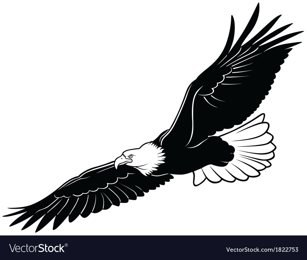 flying bald eagle royalty free vector image vectorstock rh vectorstock com bald eagle vector black and white bald eagle silhouette vector