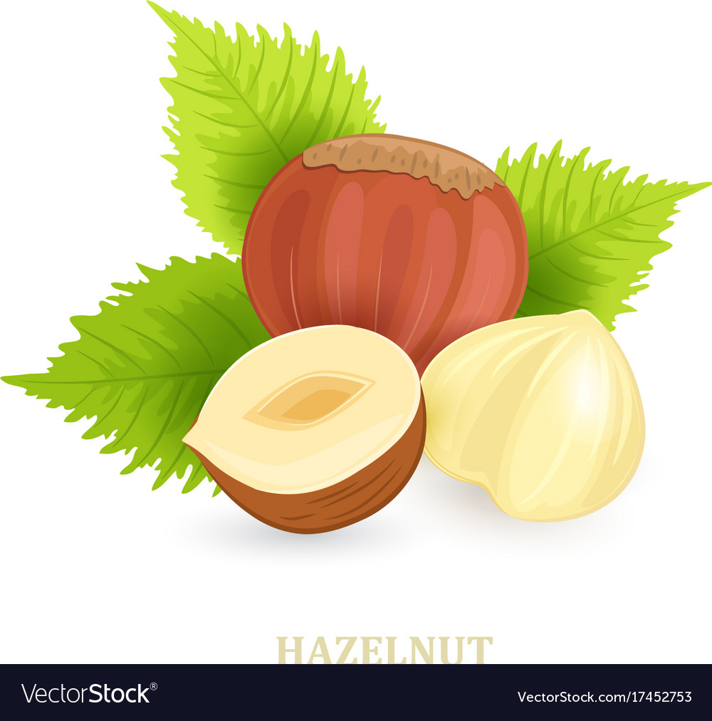Group of hazelnuts with leaves on white
