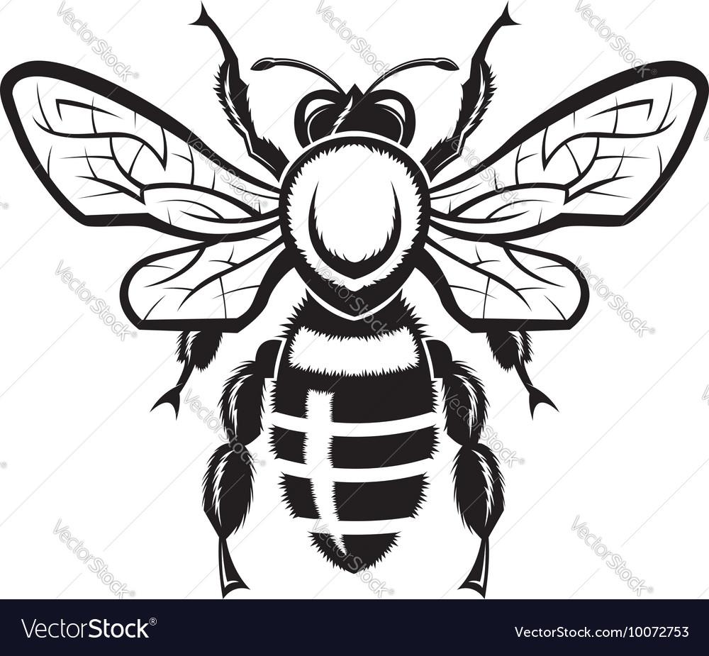 Image of bee vector image