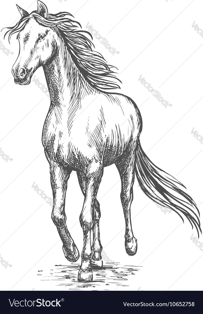 Horse Pencil Sketch Images Chelss Chapman