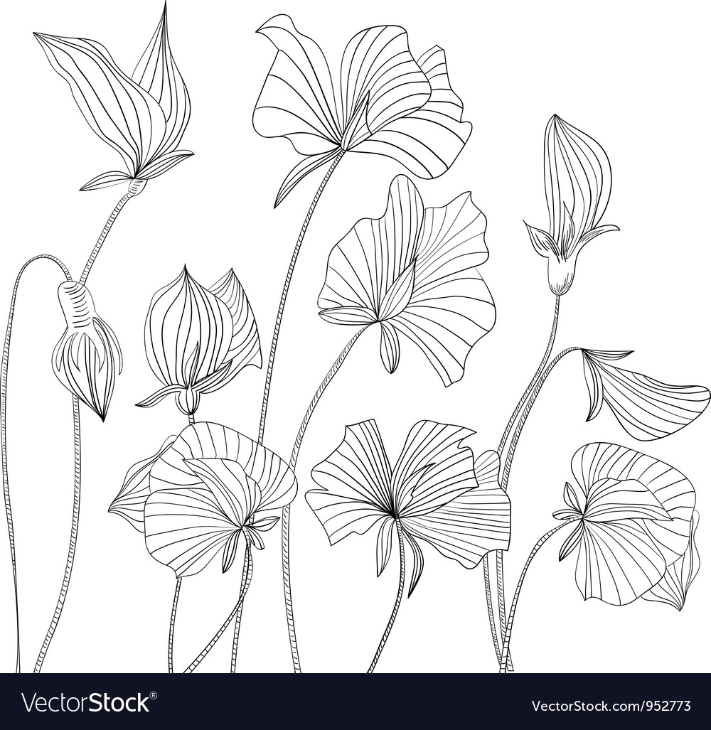 Monochrome Sweet Pea Flowers Royalty Free Vector Image
