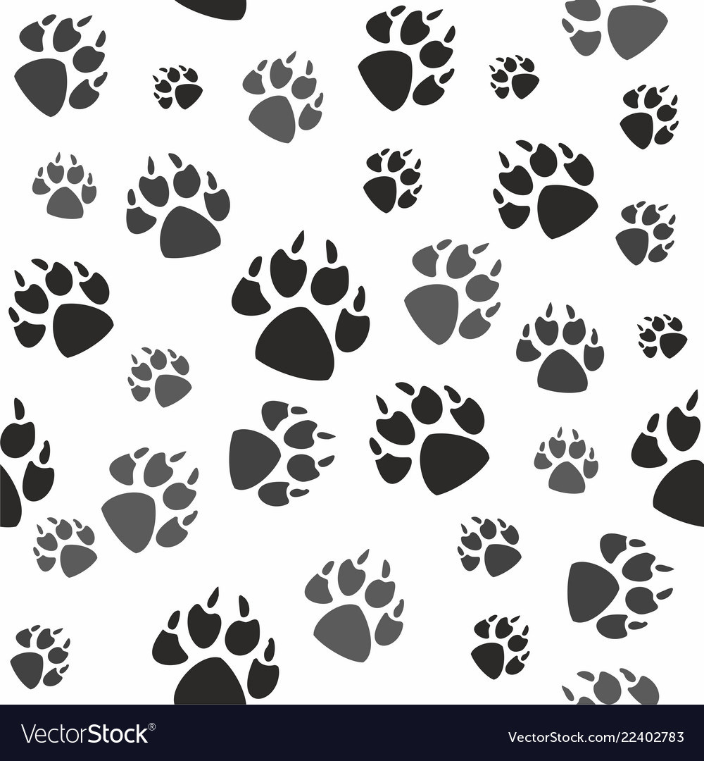 Animal black foots and wildlife