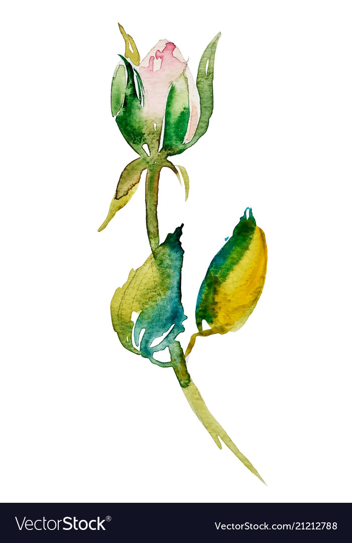 Watercolor rose bud with leaves