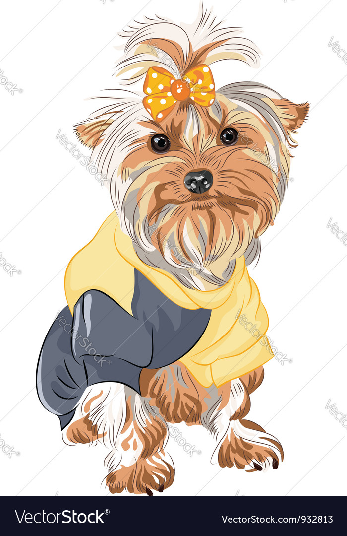 Pedigreed dog Yorkshire vector image