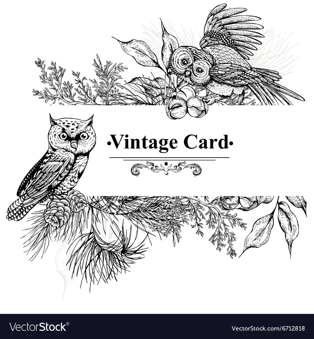 Forest greeting cards with owls spruce and fir vector image m4hsunfo