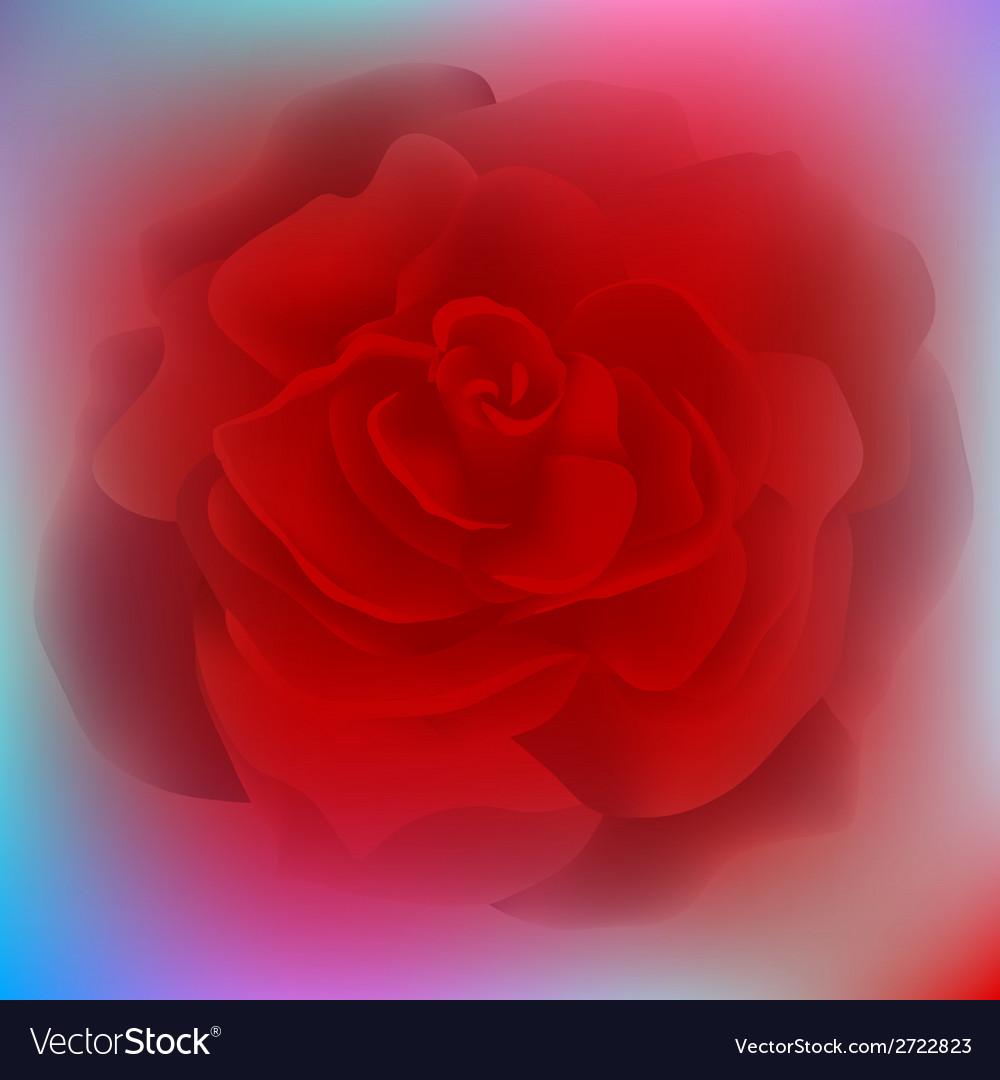Flower rose blossom bloom floral background summer