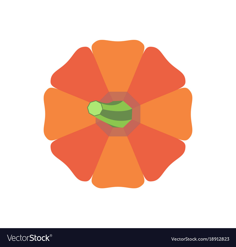 Halloween pumpkin with green stem vegetable icon vector image