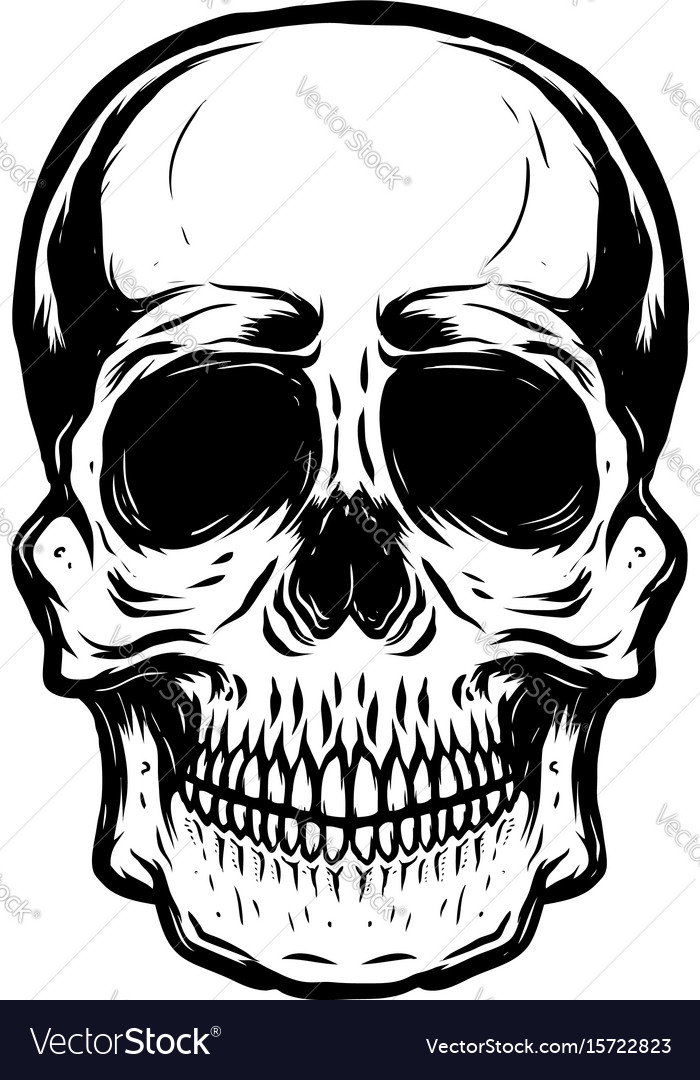 Hand drawn human skull on white background
