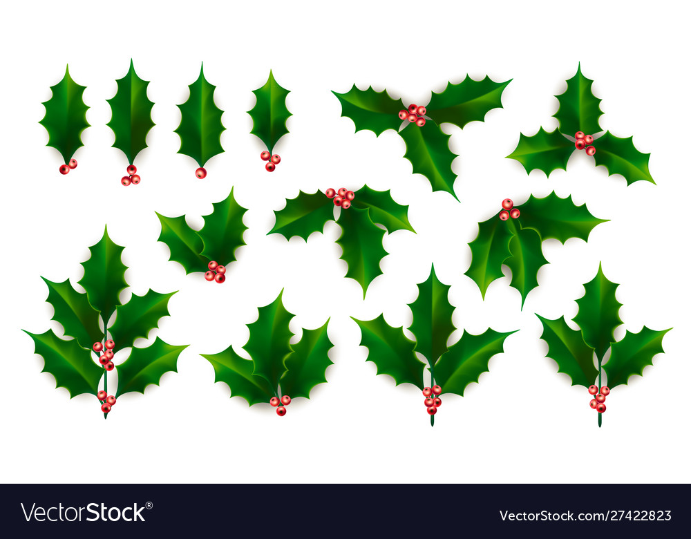 Realistic holly ilex branch with berry and