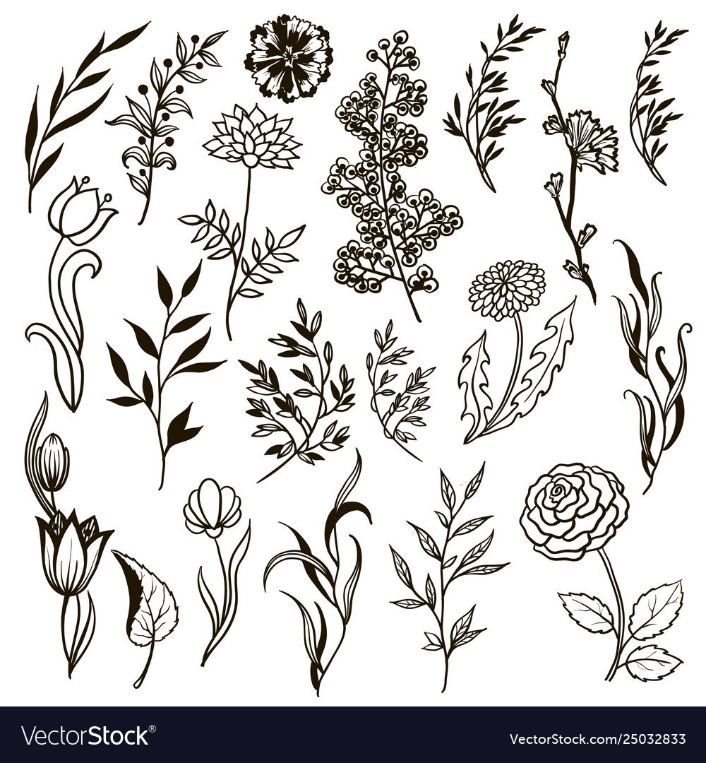 Set plants doodle herbs