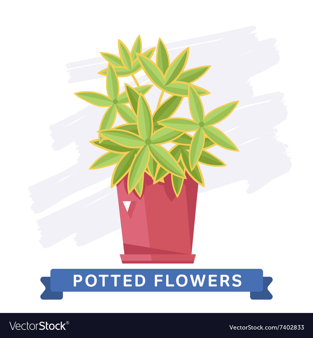 Spring Colorful Flowers In Pots Royalty Free Vector Image