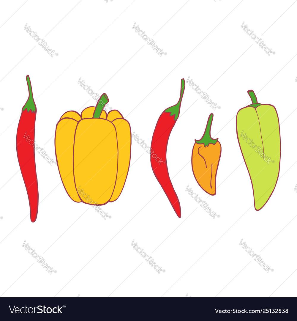 Isolated flat set pepper
