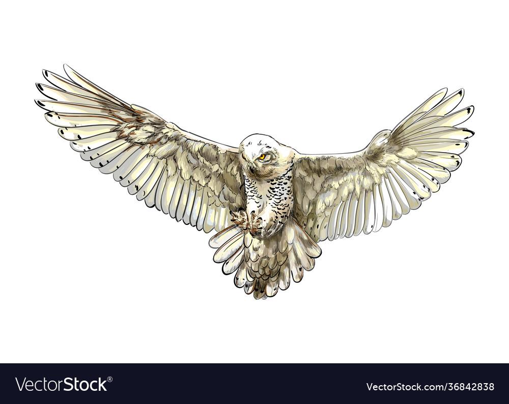 Long-eared owl eagle owl polar owl in flight