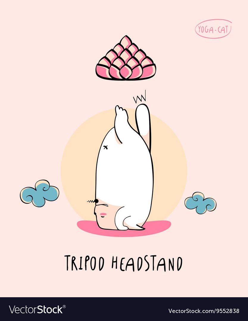 Yoga-Cat in Tripod Headstand pose aka sirsasana vector image