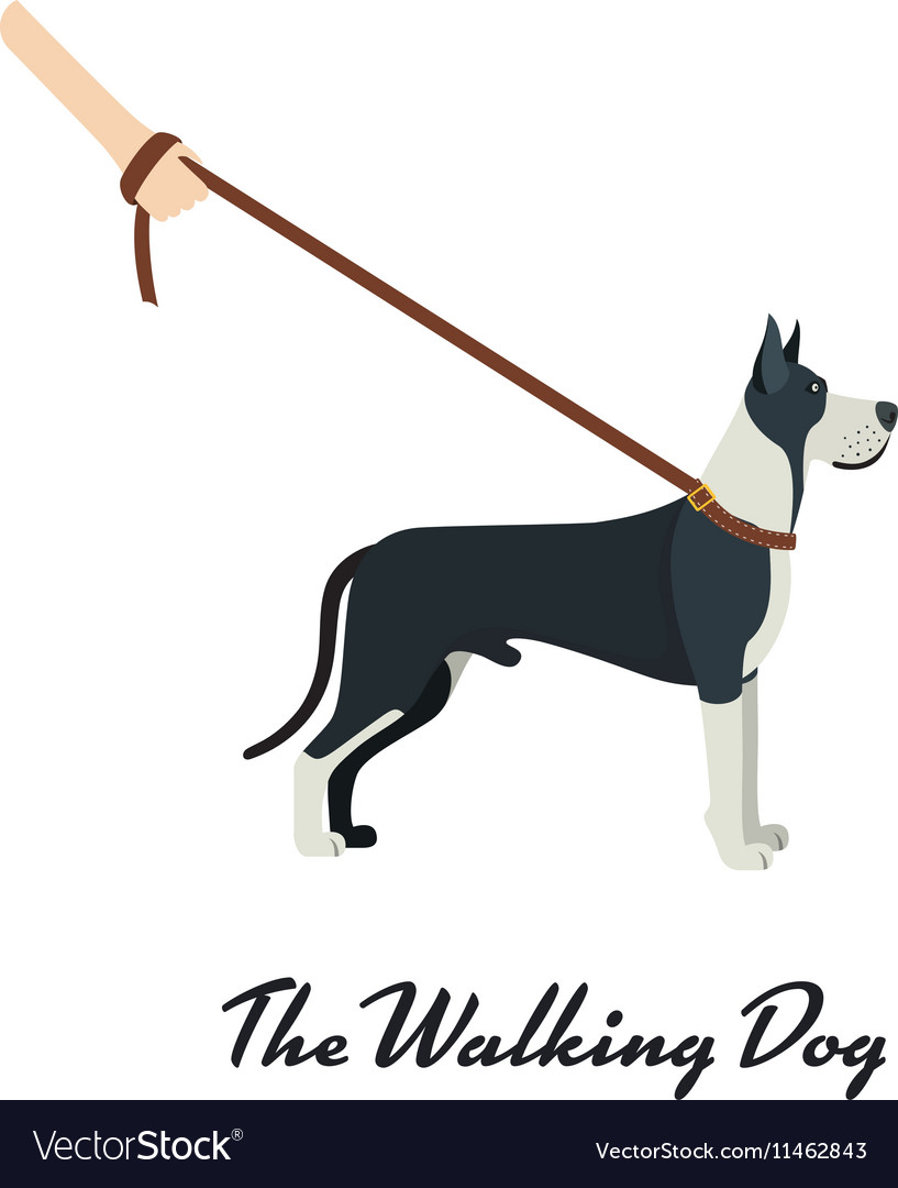 Great Dane with a leash - on white background