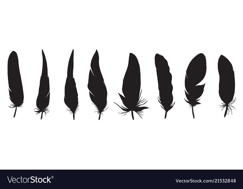 Set of detailed black feather silhouette isolated