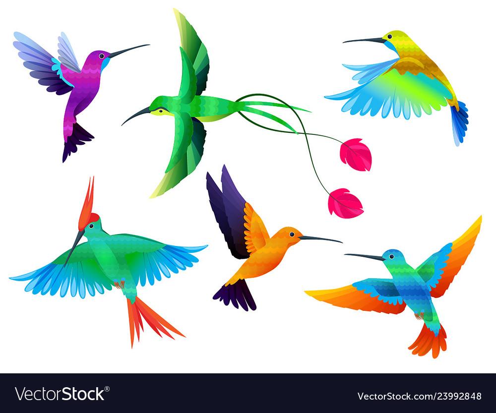 Tropical birds hummingbirds toucan colored parrot