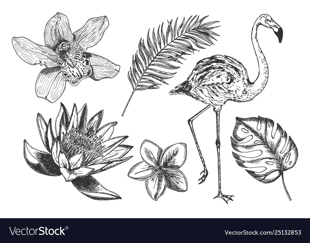 Tropical flowers leaves flamingo set vector
