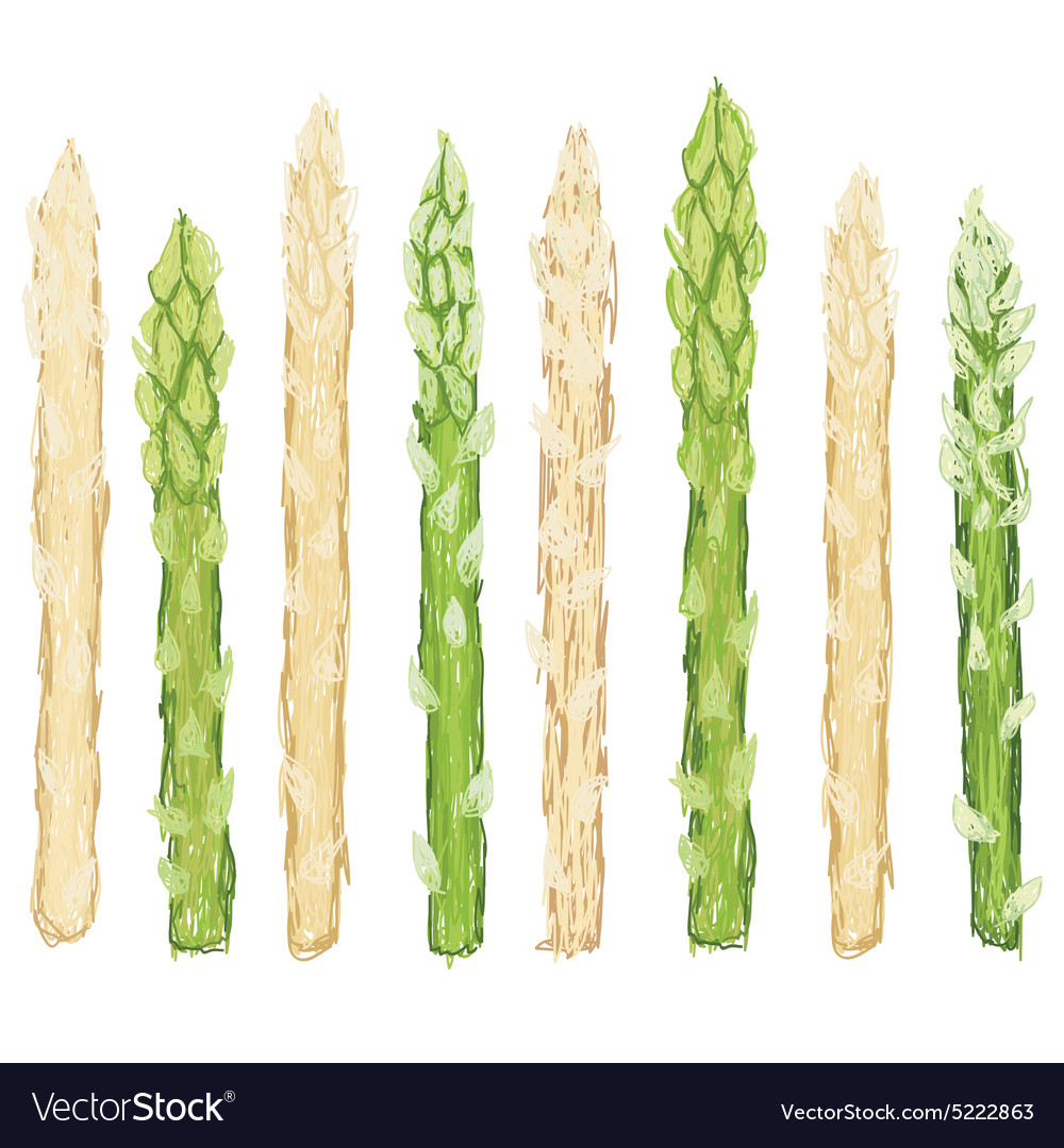 Closeup Fresh Green And White Asparagus Raw Vector Image