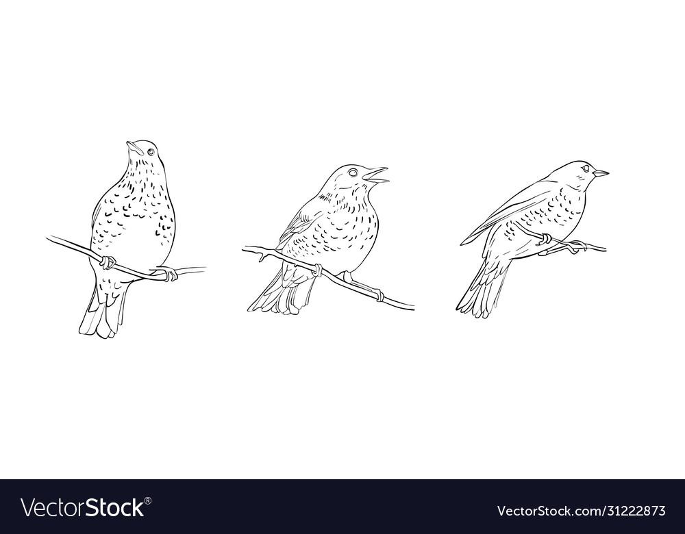 Birds at tree branch