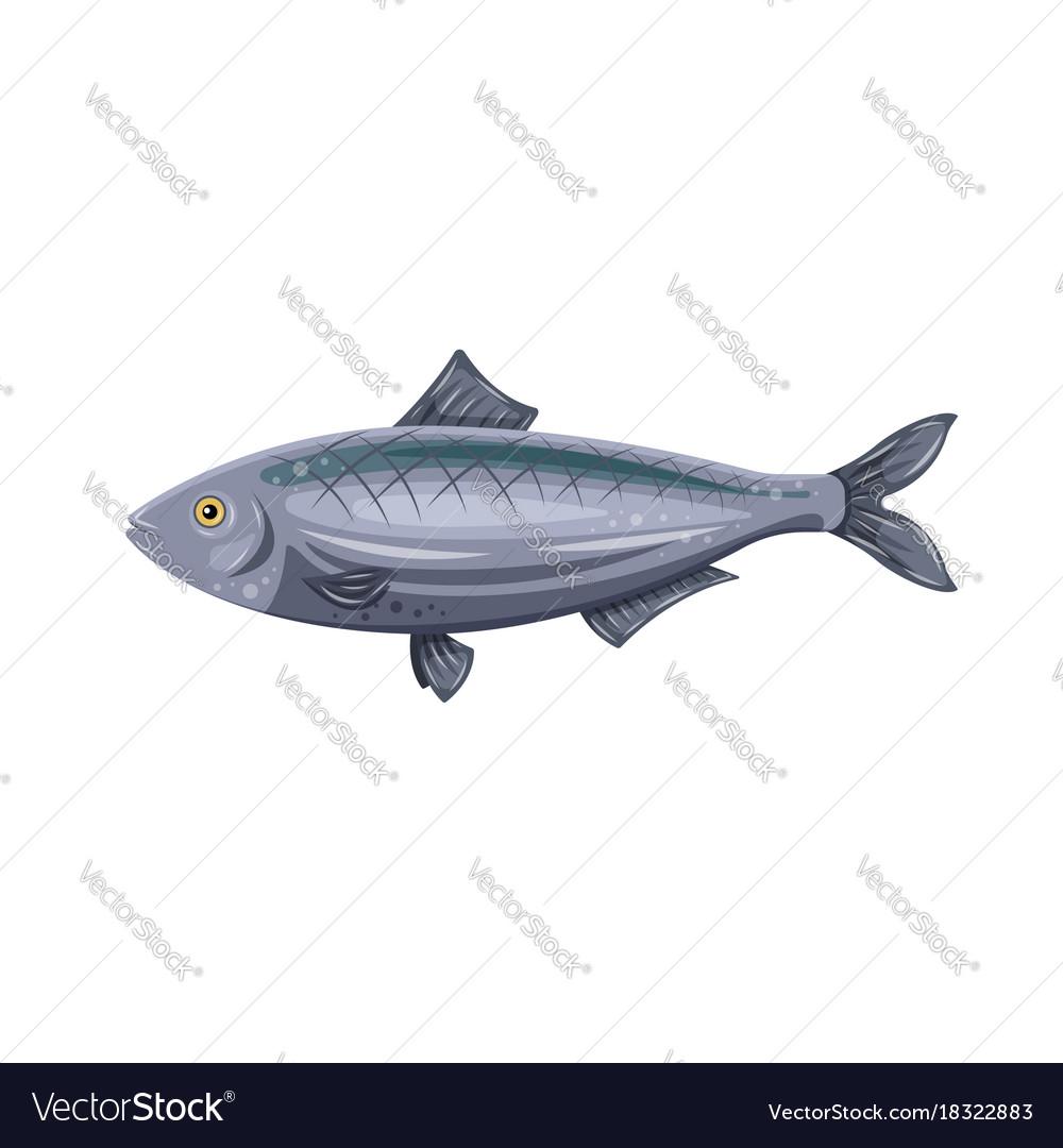 Icon flat herring fish isolated on white
