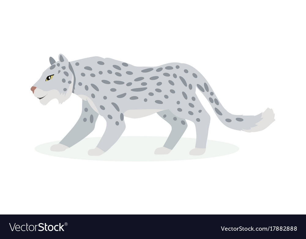 snow leopard cartoon flat royalty free vector image rh vectorstock com snow leopard cartoon images snow leopard cartoon images