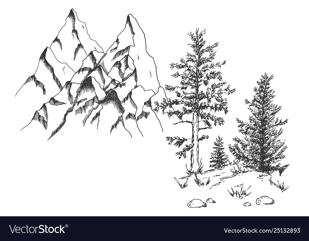 Coniferous tree pine at rock bottom
