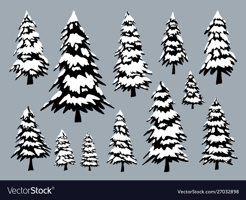 pine trees with snow in winter royalty free vector image  vectorstock