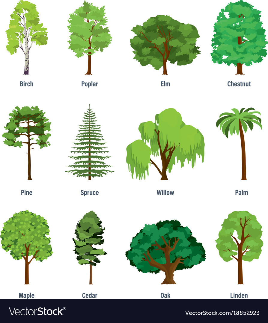 Collection of different kinds of trees