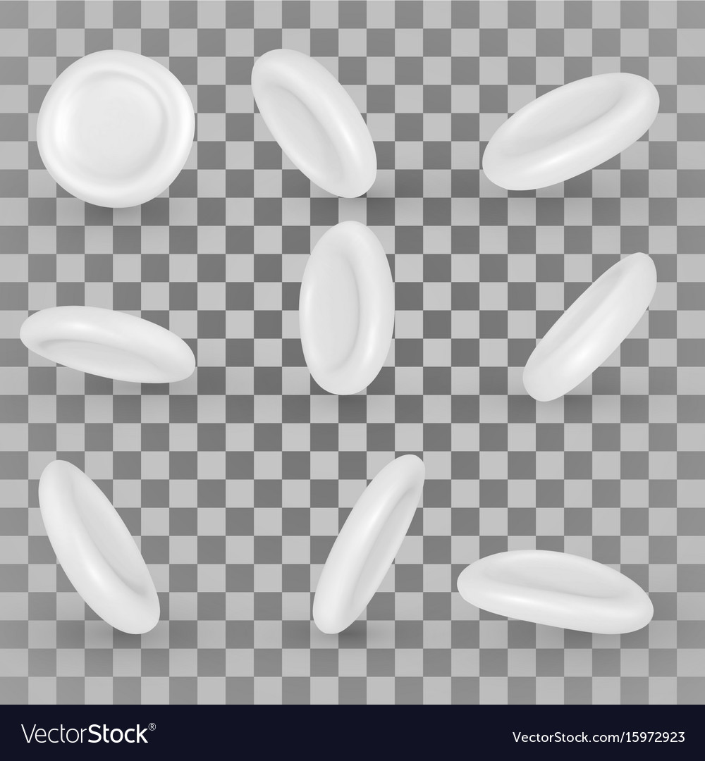 White blood cells vector image