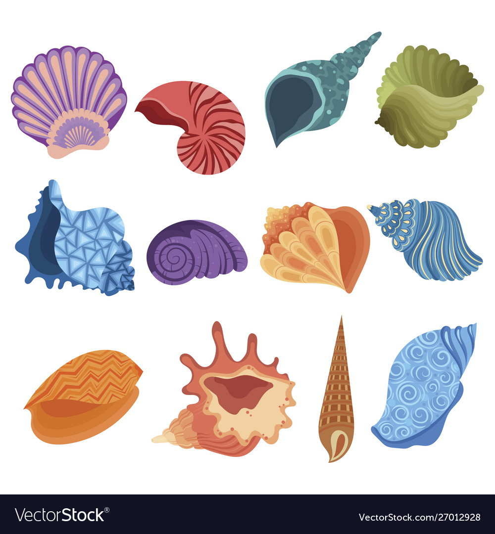 Set cartoon seashells a collection sea
