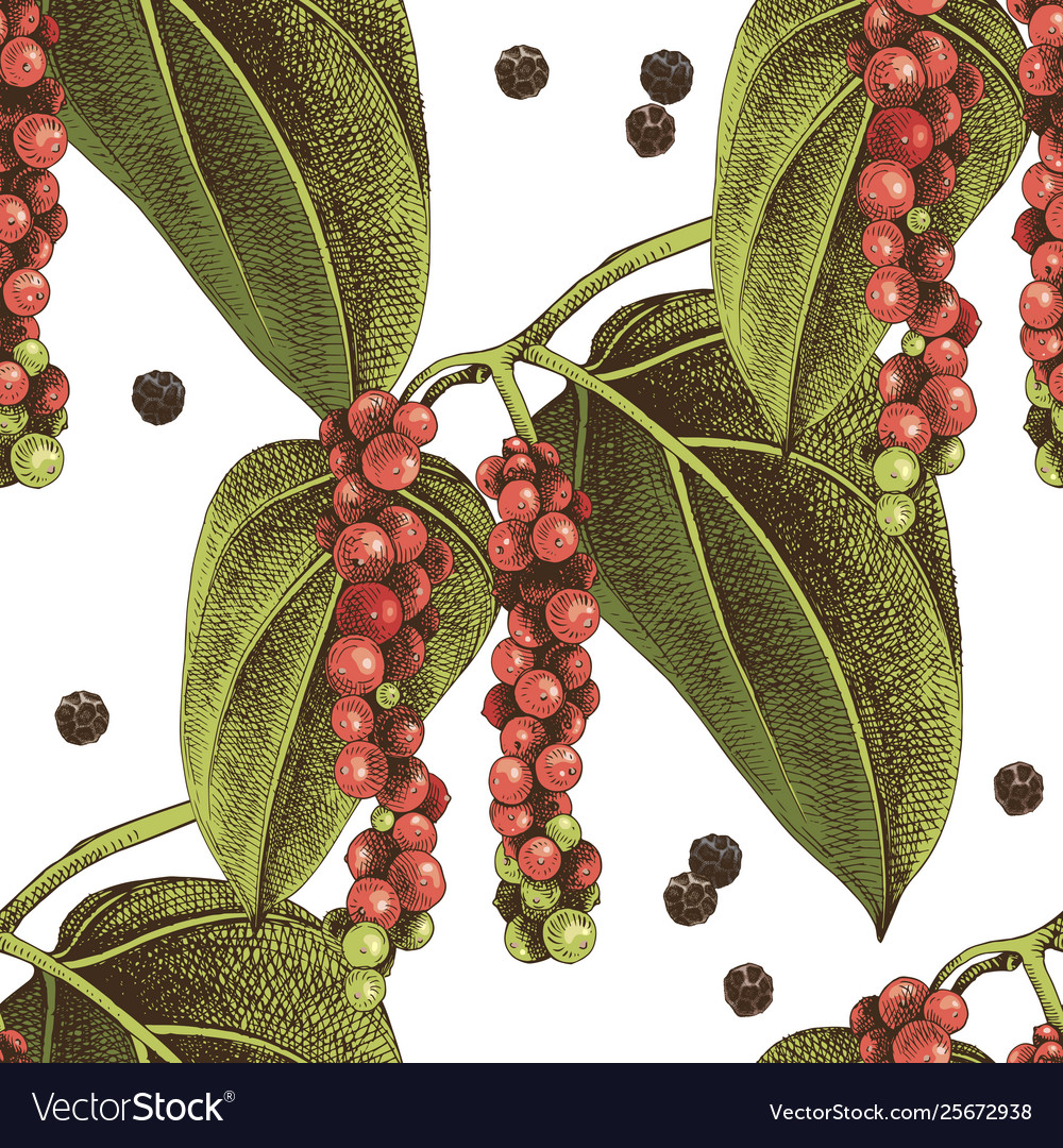 Seamless pattern with hand drawn pepper plant